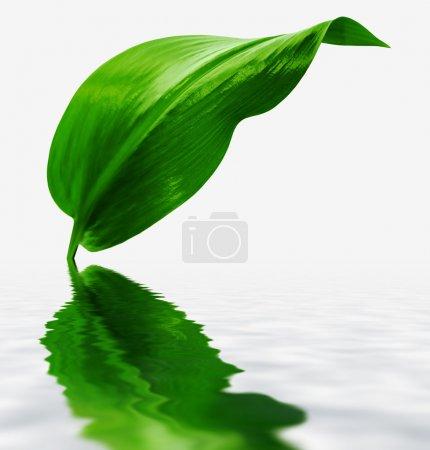 Photo pour Feuille verte avec réflexion - image libre de droit