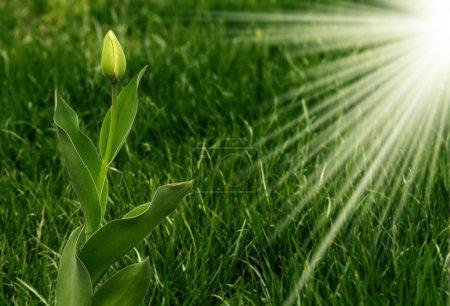 Foto de Fondo verde hierba - Imagen libre de derechos