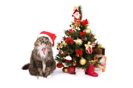 Photo pour Chat de Santa est déguiser en bonnet de Noël rouge et assis par l'arbre de Noël sur fond blanc. Chat domestique de nouvelle année de chapeau et cherche à la caméra - image libre de droit