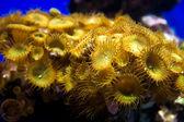 Small sea underwater plant