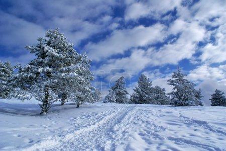 Photo pour Épinettes, recouverts de neige dans le paysage d'hiver magnifique - image libre de droit