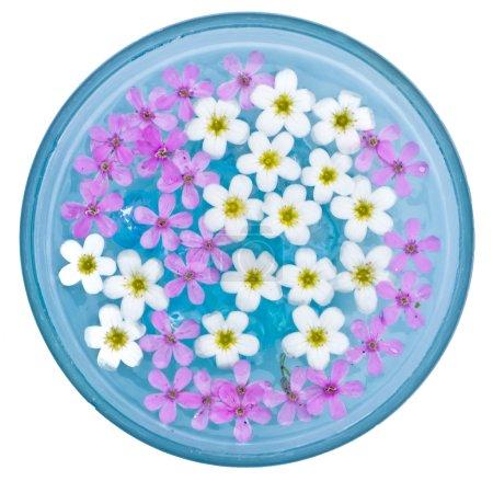 Photo pour Bol bleu avec fleurs de flottement - image libre de droit