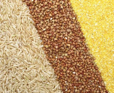 Photo pour Riz brun, sarrasin et grains de maïs . - image libre de droit