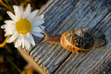 Snail on the wooden bar and flower