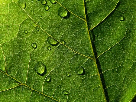 Dark-green leaf with drops of the rain