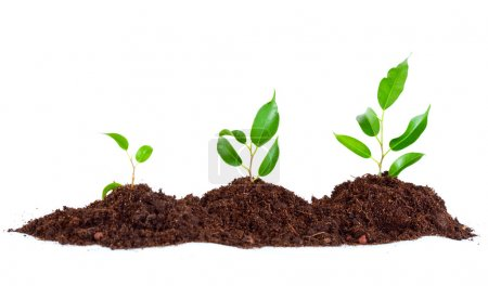 Photo for Three plants in soil. Isolated on white background - Royalty Free Image