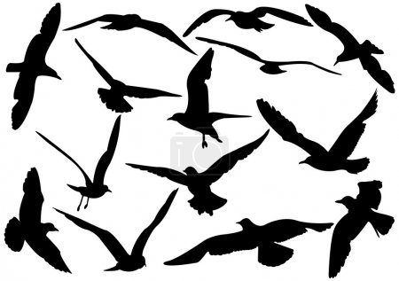 Flying sea-gulls vector illustration