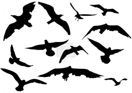 Illustration for Variety flying sea-gulls vector illustration - Royalty Free Image