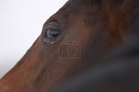 Profile of horse's face close up