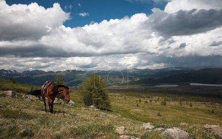 Horse in Sayan mountains