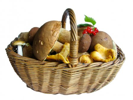 Basket full of mushrooms. Isolated image