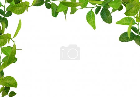 Photo for Green leaves frame - Royalty Free Image