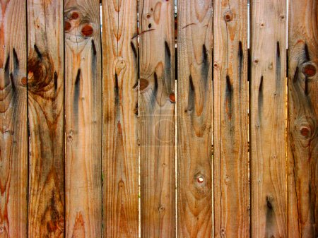 Wooden fence with rusty nails
