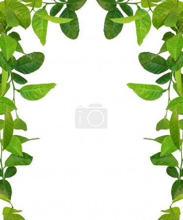 Green leaves frame - similar images avai