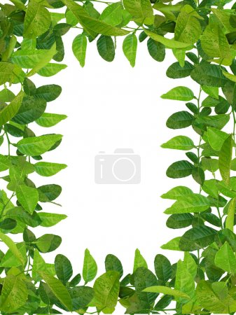 Photo for Fresh green leaves frame - Royalty Free Image
