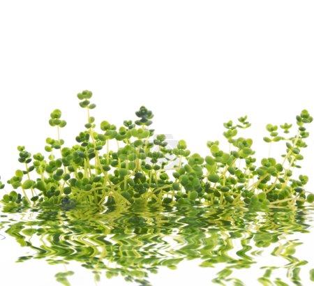 Magic green grass