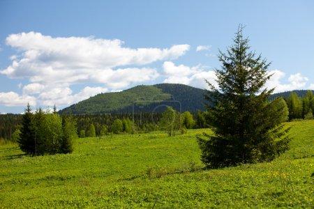 Photo pour Paysage d'été. montagnes de l'Oural. un pré vert - image libre de droit