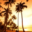 Coconut palms on sand beach in tropic on sunset. Thailand, Koh Chang, Kai Bae beach