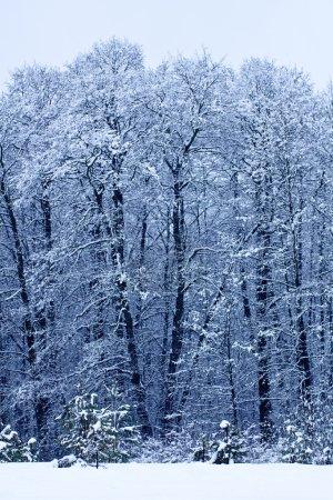 Photo pour Paysage d'hiver avec des arbres en journée givrée - image libre de droit