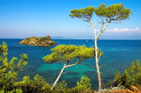 Landscape with pines on the island