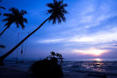Coconut palms and swing on sand beach