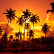 Coconut palms on sand beach in tropic on sunset. T...