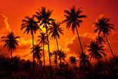 Coconut palms on sand beach
