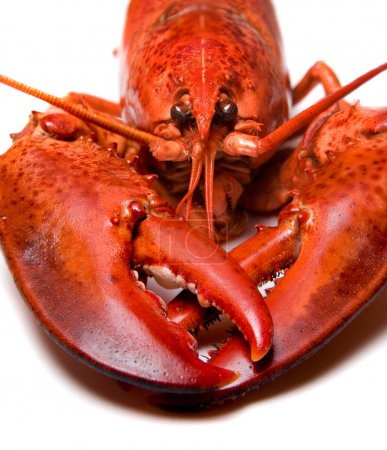 Photo for Lobster - Royalty Free Image