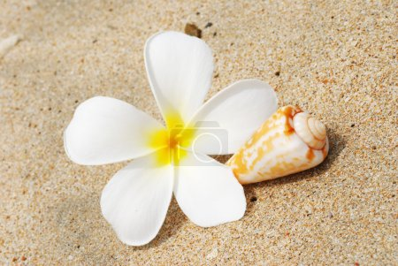 Shell & flower on a beach