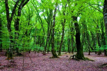 Photo pour Forêt de concept - vert nature au cours de la journée d'été lumineuse - image libre de droit