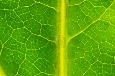 Photo for Very extreme close up of green leave - Royalty Free Image