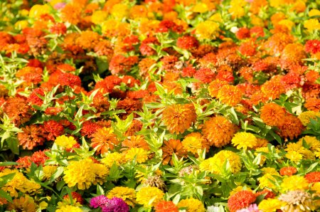 Flower bed on the bright summer day