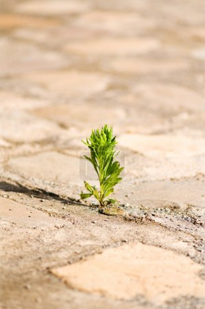 Photo for Seedling illustrating the concept of new life - Royalty Free Image