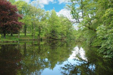 Photo pour Forêt près du lac en été - image libre de droit