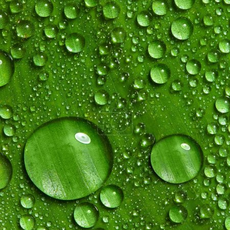 Photo for Dew on green leaf with drops of water - Royalty Free Image