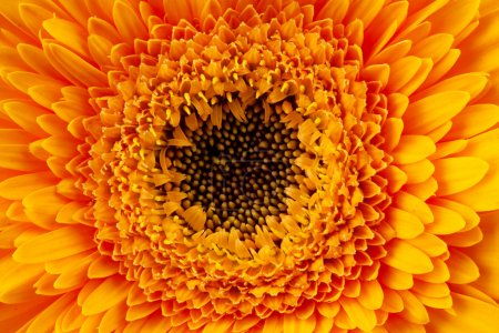 Close up view of yellow daisy
