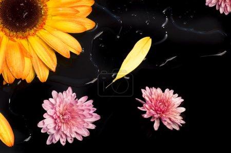 Photo pour Fleur stilll vie - image libre de droit