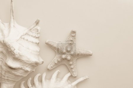 Photo for Some seashells and seastar. Toned in sepia - Royalty Free Image