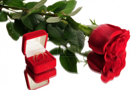 Red rose and wedding rings