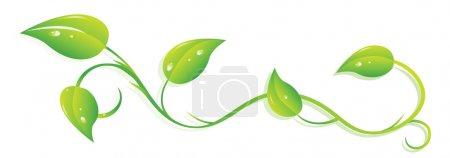Ivy twig...