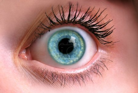 Photo for Close up of an eye of the beautiful girl - Royalty Free Image
