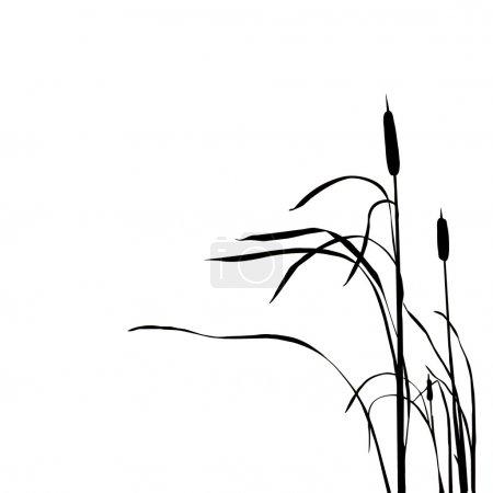 Photo pour Silhouette du roseau - image libre de droit