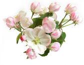 """Постер, картина, фотообои """"красивые цветы яблони"""""""