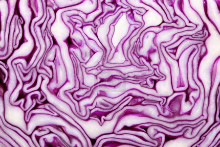 Photo for Red Cabbage Texture. Isolated on white background - Royalty Free Image