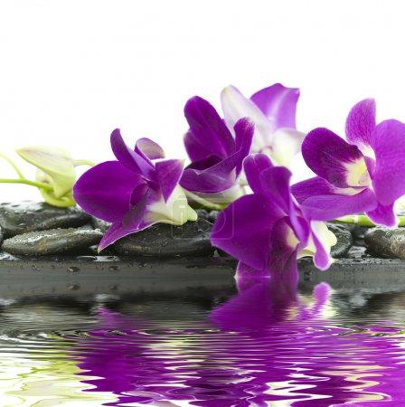 Photo pour Gros plan de belles orchidées violettes sur des pierres de massage (fond blanc) avec mise au point douce reflétée dans l'eau - image libre de droit