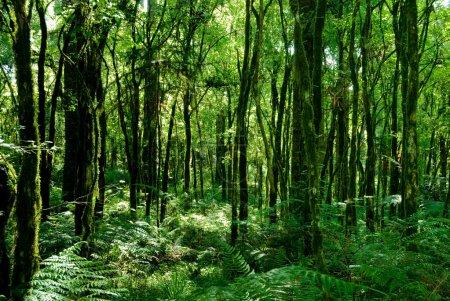 Photo pour Troncs d'arbres avec de la mousse sur la forêt tropicale atlantique brésilienne. - image libre de droit
