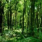 Trunks of trees with moss on brazilian atlantic ra...