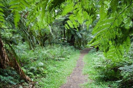 Photo pour Piste dans la forêt tropicale atlantique, sud du Brésil. - image libre de droit