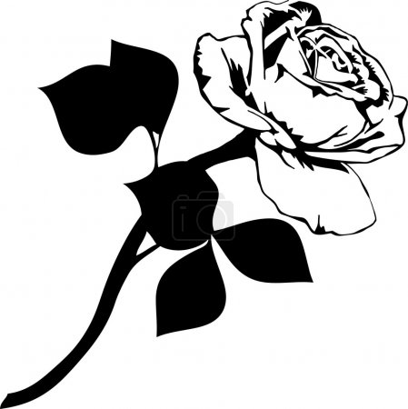 Illustration pour Illustration vectorielle rose - image libre de droit