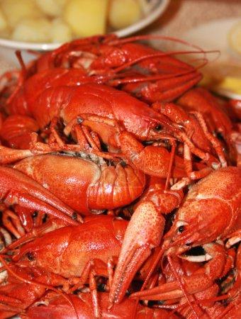 Fresh boiled crawfish